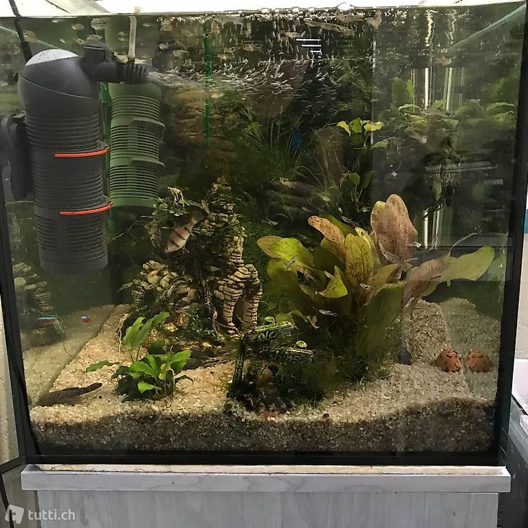 aquarium komplett ideal f r einsteiger in bern kaufen. Black Bedroom Furniture Sets. Home Design Ideas