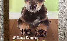 Taschenbuch - Ich gehöre zu Dir / W. Bruce Cameron