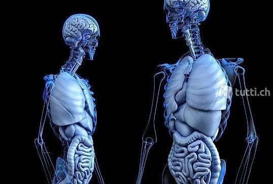 Leitender Arzt Gastroenterologie / Hepatologie