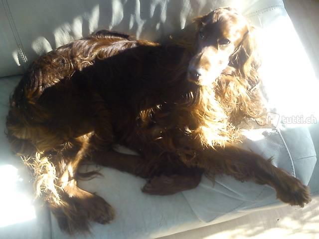 Hundebetreuung inklusive Abhol- und Bringservice