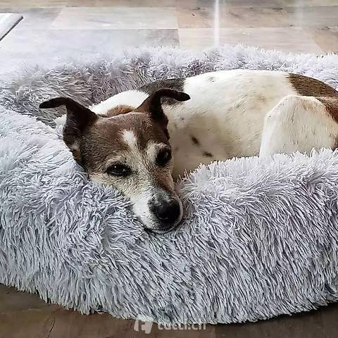 Ultrakuscheliges Hundebett hellgrau 1m mit abnehmbarem Bezug