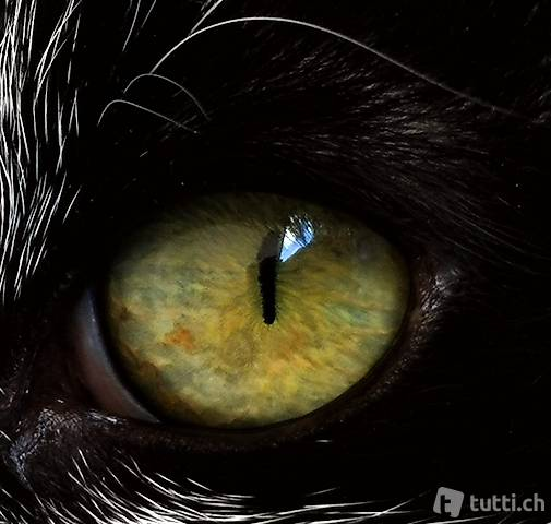 Catsitter /Catsitting-Service in Rafz und Wil ZH